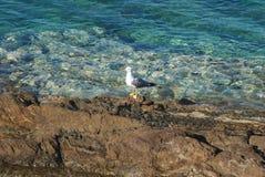 Одна красивая чайка Стоковое Изображение