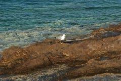 Одна красивая чайка Стоковая Фотография