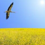 Одна муха аиста в ясном голубом небе Стоковые Изображения