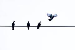Одна муха голубя как свобода Стоковые Изображения
