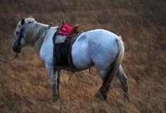 Одна лошадь Стоковое Фото