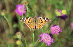 Одна простая бабочка Стоковые Фото