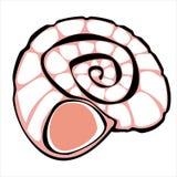 Одна розовая раковина изолированная на белизне Стоковая Фотография
