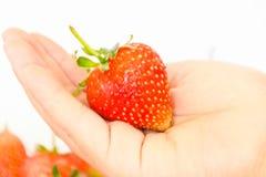 Одна рука держа свежие фрукты клубники стоковые фото