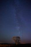 Одна стойка дерева на ноче играет главные роли предпосылка Стоковые Фотографии RF
