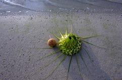 Одна шляпа кокоса и солнца на песочном береге моря Стоковая Фотография RF