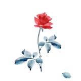 Одна элегантная красная роза с серым цветом выходит на белую предпосылку акварель Стоковое Изображение RF