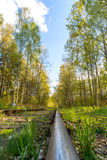 Одноколейный путь в лесе Стоковое Фото