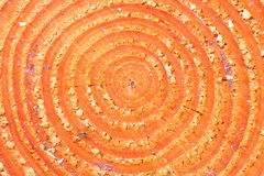 однолетние кольца Стоковые Фотографии RF