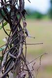 Одно в цветке Стоковая Фотография RF