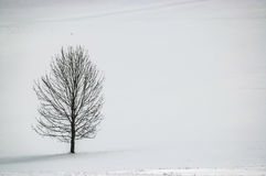 Одно дерево в ландшафте Стоковое Фото