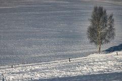 Одно дерево в ландшафте Стоковая Фотография