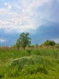 Одно дерево, зеленый тростник и бурное облачное небо Стоковое Изображение RF