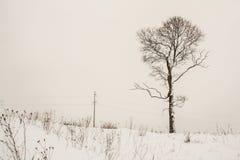 Одно дерево зимы в снежном ландшафте Стоковые Изображения