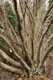 Одно дерево много путей Стоковая Фотография