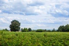 Одно дерево на поле Стоковое Изображение