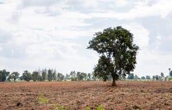 Одно дерево на поле Стоковая Фотография RF