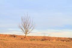 Одно дерево Стоковое Изображение RF
