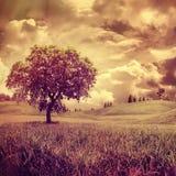 Одно дерево. Стоковая Фотография