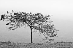 Одно дерево na górze горы стоковое фото rf