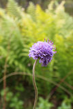Одно красивое и полевой цветок Стоковое Фото