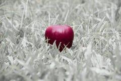 Одно красное яблоко на черно-белой предпосылке травы Стоковые Фотографии RF