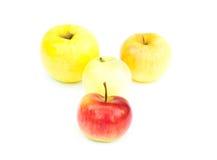 Одно красное яблоко перед яблоками желтого цвета группы Стоковое фото RF