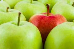 Одно красное яблоко среди зеленых яблок Стоковые Изображения RF