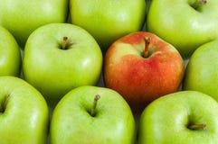 Одно красное яблоко среди зеленых яблок Стоковое Изображение