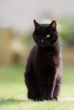 Одно наблюданное усаживание черного кота стоковые изображения
