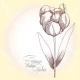 Одно ретро tulipe бесплатная иллюстрация