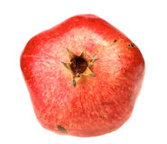 Одно свежее красное гранатовое дерево Стоковые Фото