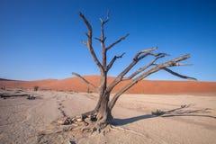 Одно сухое дерево в долине Sossusvlei Намибии пустыни Стоковое Фото