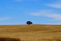 Одно уединённое дерево на холме в Аризоне Стоковое Изображение RF