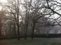 Одно утро зимы Стоковое Фото