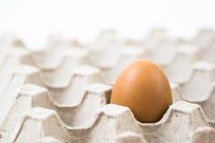 Одно яичко внутри рециркулирует бумажный поднос Стоковая Фотография RF