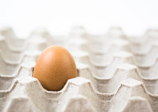 Одно яичко внутри рециркулирует бумажный поднос Стоковое Изображение