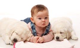 2 одно puppie месяца старое золотого retriever с немногим 4 mo Стоковое Изображение RF
