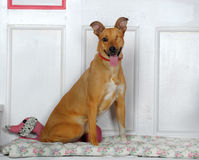 Одн-наблюданная собака Стоковые Фотографии RF
