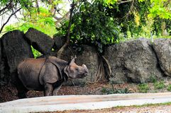 Одн-horned носорог в зоопарке Стоковая Фотография