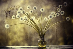 Одуванчики в белой вазе на окне стоковое фото rf