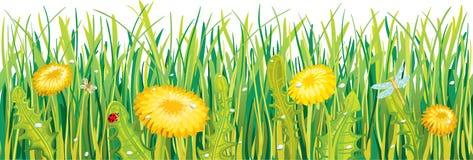 Одуванчики в траве Стоковое Фото