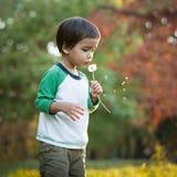 Одуванчики мальчика дуя Стоковые Изображения RF