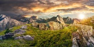 Одуванчики среди утесов в высоких горах Tatra Стоковые Изображения RF
