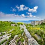 Одуванчики среди утесов на горном склоне Стоковая Фотография RF