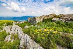 Одуванчики среди утесов на горном склоне Стоковое Изображение RF