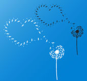 Одуванчики с сердцами Стоковое Фото