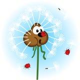 Одуванчик и ladybug Стоковая Фотография