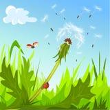 Одуванчик и ladybugs против неба Стоковое Изображение