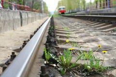 Одуванчик между трамвайной линией слиперов Стоковые Фото